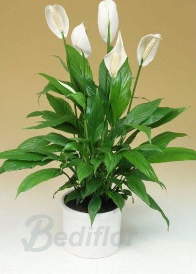 Planta en Tonos Blancos