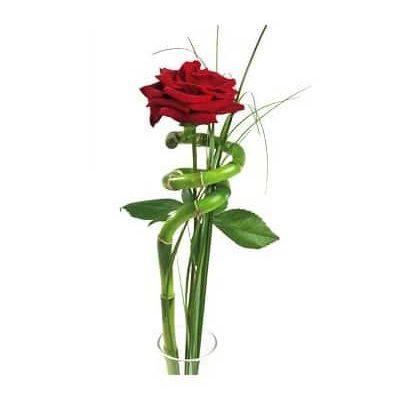 Rosa Preparada Amor Regalo Domicilio