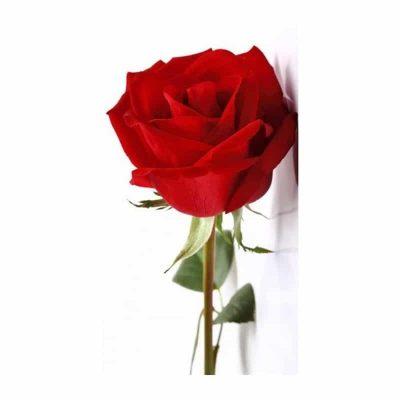 Rosa Preservada Regalo Amor Domicilio