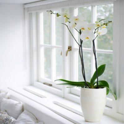 Orquidea Blanca Regalo Domicilio