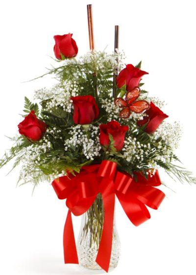 6 Rosas con Paniculata