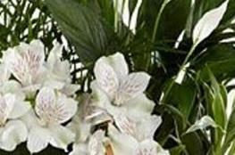 Detalle de lillium
