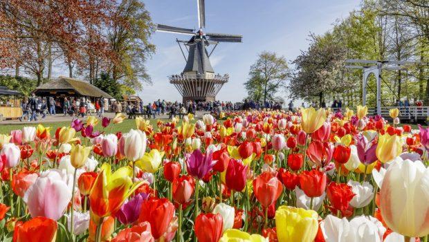 <span>Keukenhof: El jardin de tulipanes más grande del mundo</span>