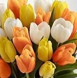 tulipanes amarillos para regalar