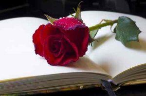 enviar rosa sant jordi, rosas, flores, ramo de rosas sant jordi, enviar rosas sant jordi, ramo rosas sant jordi