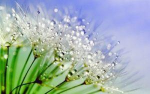 Flores Bediflor