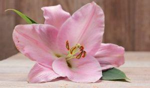 Centro de Flor Lillium