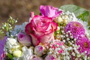 Rosas y Paniculata