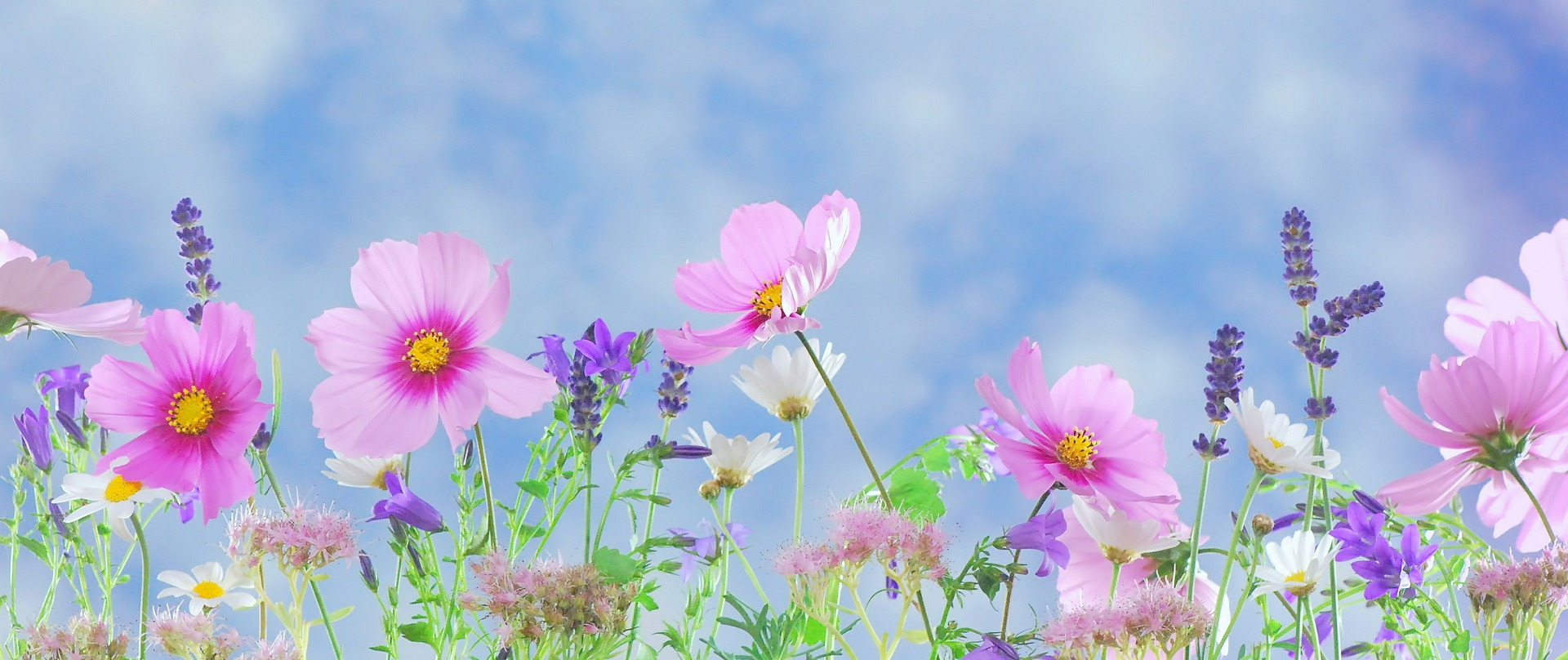Flores para Verano